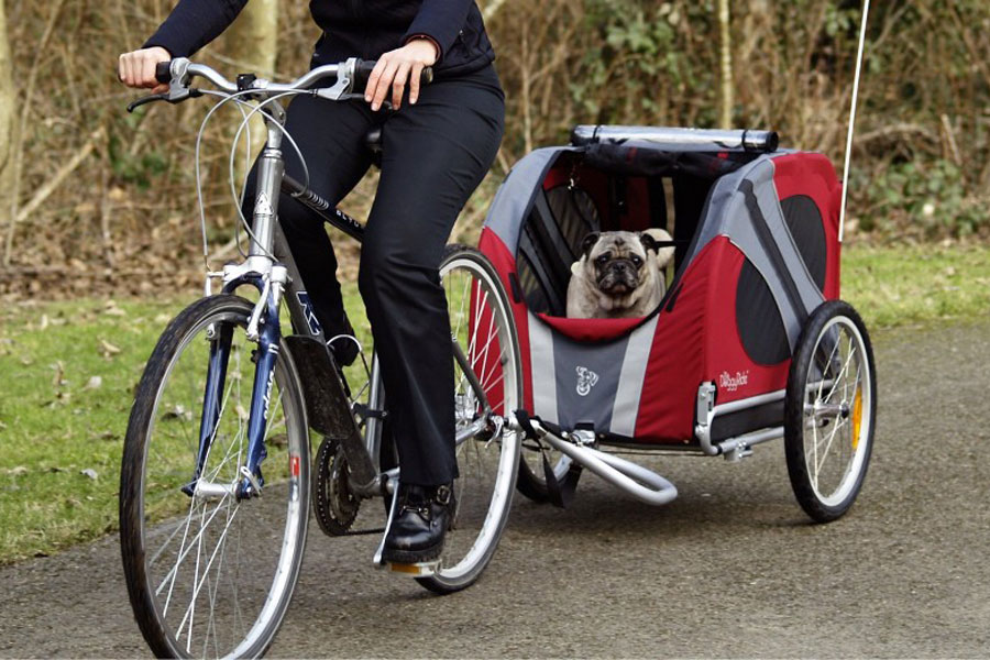 Points to Consider Before Buying a Dog Trailer