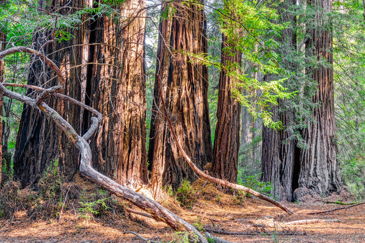 30 best places to camp in california
