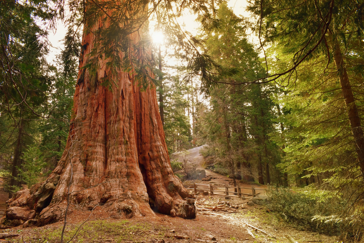 best time to visit sequoia national park